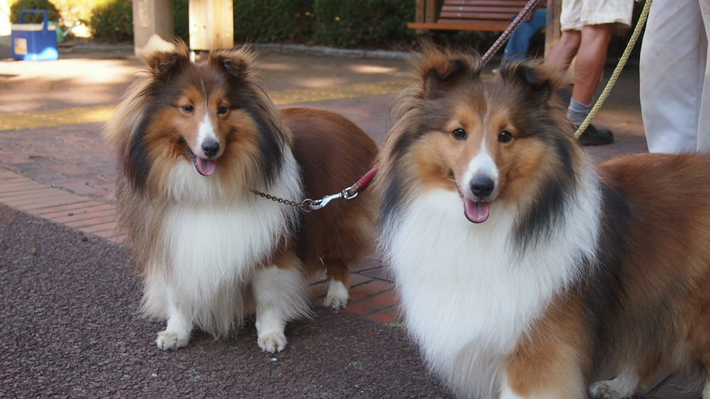 Two twin dogs.