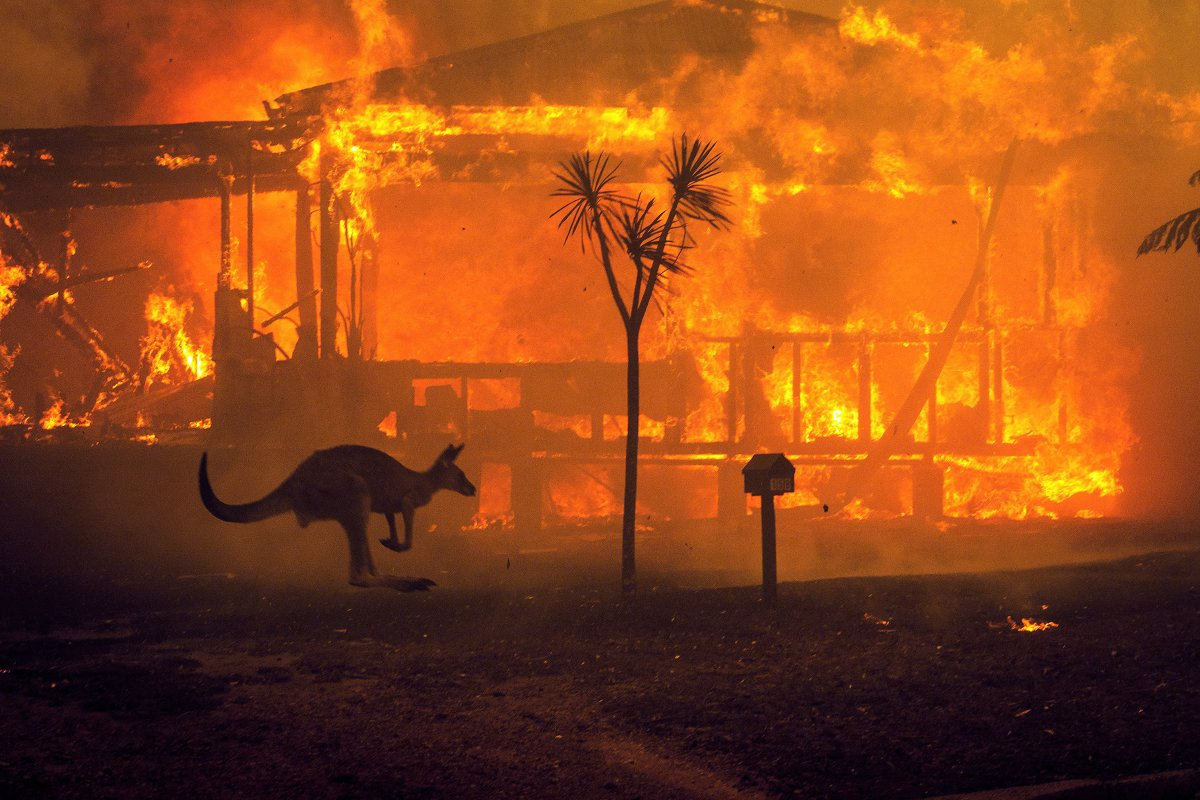 A kangaroo rushes past a burning house in Lake Conjola, Australia.